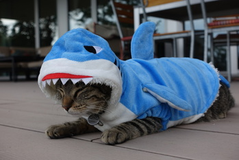 déguisement requin pour chat