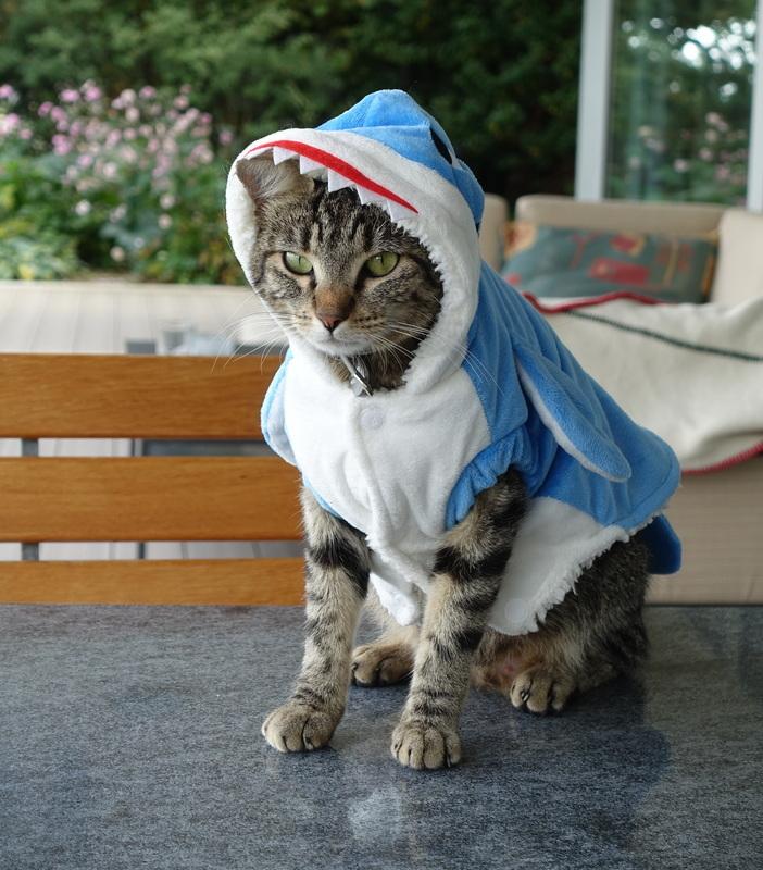 chat déguisement - fontaine à eau pour chat
