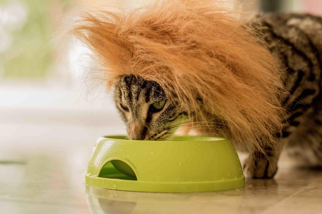 Bol pour chat - fontaine à eau pour chat