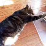 chats sous-consommation eau
