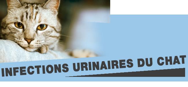 la sous-consommation d'eau chez les chats entraîne de très graves problèmes