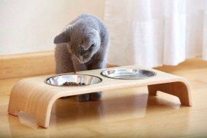 Manger uniquement des biscuits secs mène à une sous-consommation d'eau chez les chats