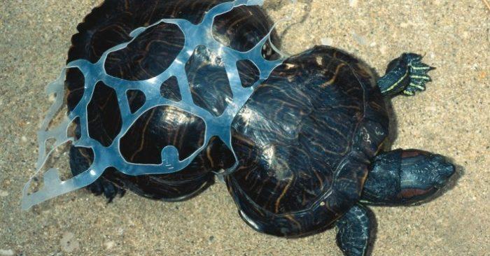 Le céramique est meilleur pour l'environnement que le plastique