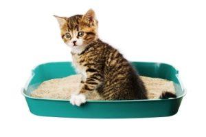 Litière pour chat et chatons