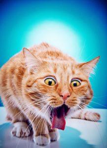 Chat qui n'aime pas le gout