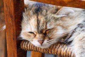 Votre chat ne s'étouffe pas si vous le protégez