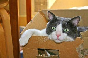 Mon chat a mangé un morceau de plastique - Chat dans un carton