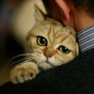 Comment reconnaître les chats bipolaires?
