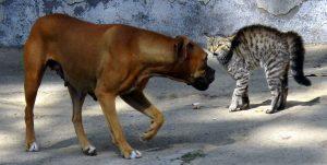 """""""mon chat déteste mon chien""""... Il y a quelques procédures à mettre en place pour éviter cette situation"""
