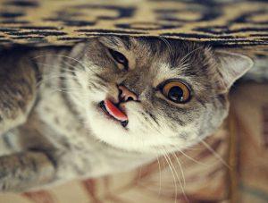 le chat tire la langue