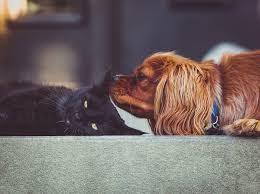 Ce chien a peur des chats et fait attention autour d'eux