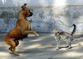 Un chat surprend un chien qui a peur des chats