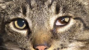 yeux - fontaine à eau chat