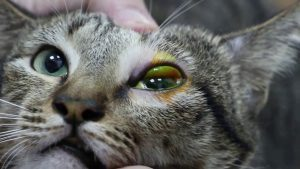 yeux - fontaine a eau chat