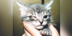 yeux - fontaine à eau eau chats