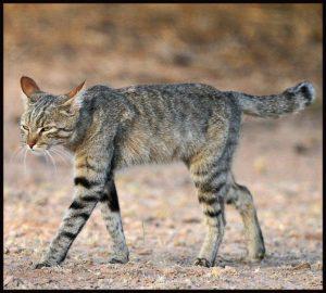 lage vochtinname bij de kat