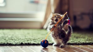 drinkfontein voor katten