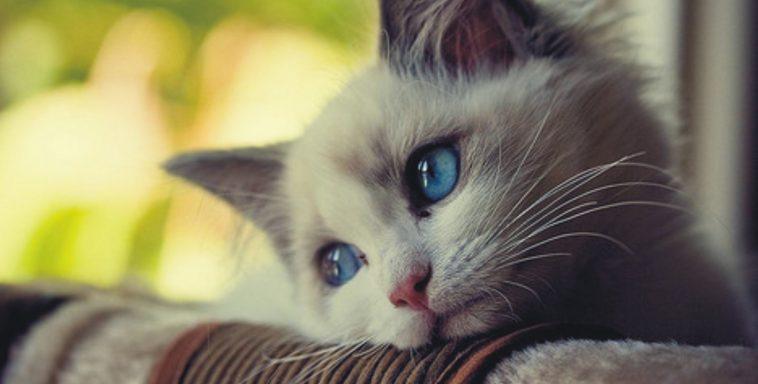 dromende cat