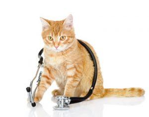 kat verliest gewicht
