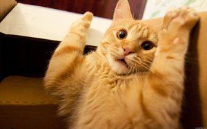 kat blaast naar kitten