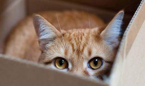 kat heeft grote pupillen