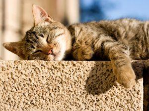 kat is lusteloos en eet niet