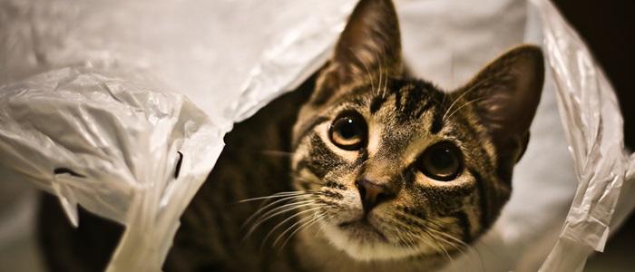 kat heeft plastic gegeten