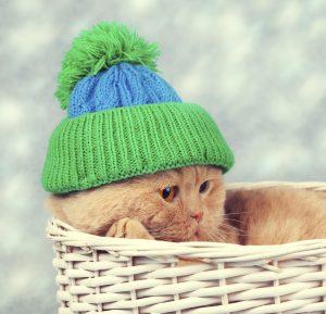 kat verkouden na inenting