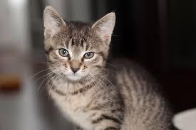 kleine kat