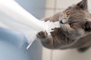 Cat eats paper