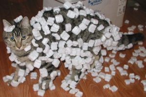 cat ate styrofoam