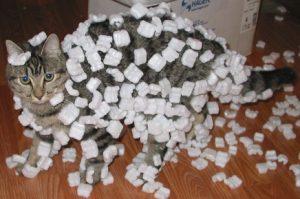 cat ate styrofoam