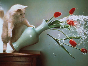 Cat breaking a vase