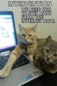 cat intervention.