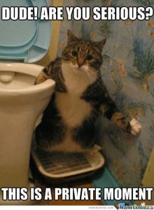 Funny cat next to toilet