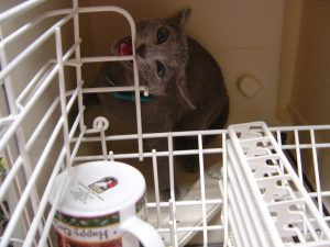 Found missing cat in dishwasher