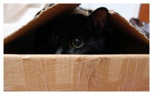 black cat hiding in box