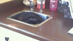Cat lying in the sink