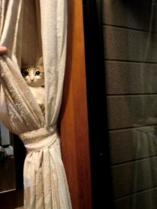 My cat went missing in my house and I found it in the curtains!