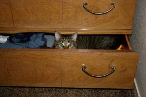 cat hiding in drawer