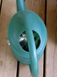 Cat found in bucket