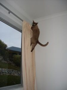 Cat climbs up the wall