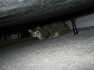 Other cat under bed