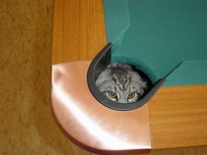 Ninja cat hiding in the pool table