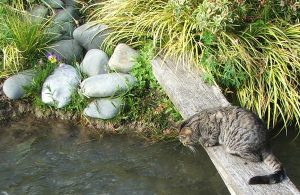 Cat watching flowing water