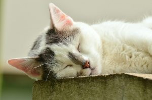 Low water intake in cats causes exhaustion