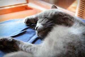 Unwell Cat