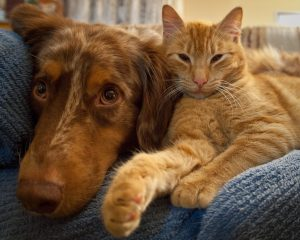 Cat and dog love each other