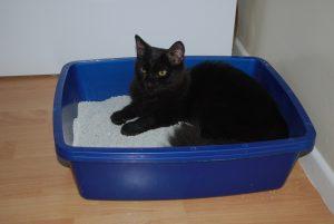 Cat in litter tray