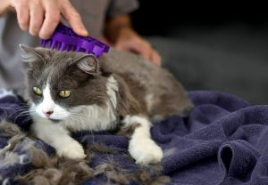 Brushing your cat will reduce hairballs